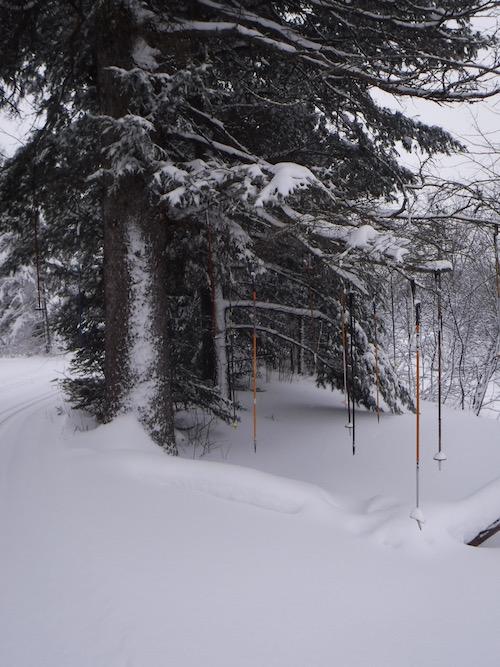 Pole Tree